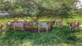 Tiere, die von der Sonne sich verstecken Lizenzfreie Stockfotos