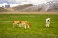 Tiere in einer wilden Landschaft Stockbilder