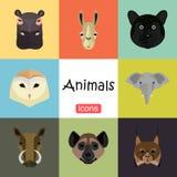 Tiere färben Ebene eingestellt auf Farbhintergrund Stockfotos