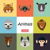 Tiere färben Ebene eingestellt auf Farbhintergrund Stockbilder