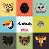 Tiere färben Ebene eingestellt auf Farbhintergrund Lizenzfreie Stockfotos