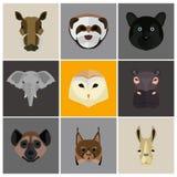 Tiere färben Ebene eingestellt auf Farbhintergrund Stockbild