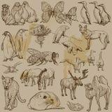Tiere - Hand gezeichneter Vektorsatz Stockbild