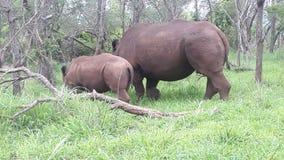 Tiere im Park Stockfoto