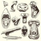 Tiere mit offenen Mundvektorköpfen von Brüllentieren verärgerter Löwe oder Krokodil und aggressiver Haifischillustrationssatz von vektor abbildung