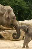 Tiere: Schätzchen- und Mutterelefant Lizenzfreie Stockfotos