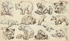Tiere um die Welt bären Ein Hand gezeichneter lebensgroßer Satz vektor abbildung
