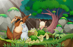 Tiere und Dschungel Stockfotos
