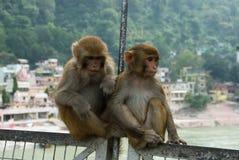 Tiere unter Leuten Lizenzfreies Stockbild