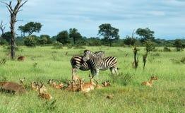 Tiere von Afrika stockfoto