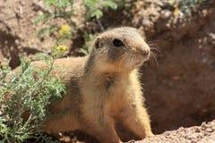 Tiere von New-Mexiko Stockfoto