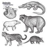 Tiere von Südamerika-Satz Lizenzfreies Stockbild