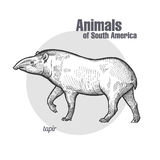 Tiere von Südamerika-Tapir Lizenzfreie Stockfotografie