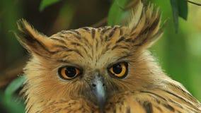 Tiere/wild lebende Tiere stock video footage