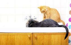 Tiere zu Hause Hund und Katze, die zusammen im Badezimmer spielen Lizenzfreies Stockbild