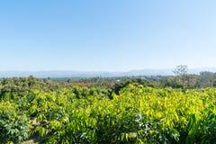 Tiered bergketens in afstand voorbij boomgaarden van noordelijk T Stock Foto