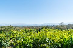 Tiered mountain ranges in distance beyond orchards of northern T. Tiered mountain ranges under blue sky in distance beyond orchards of northern Thailand Stock Photo