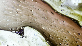 Tierelantijntje van Verven Stock Afbeelding