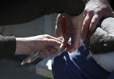 Tierforschung, Fahrwerkbein-Streifenbildung des Sevogels Lizenzfreies Stockbild