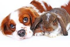 Tierfreunde Wahre Haustierfreunde Hundekaninchenhäschen stutzen Tiere zusammen auf lokalisiertem weißem Studiohintergrund Haustie stockfotos