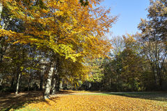 Tiergarten in autumn in Berlin Royalty Free Stock Photos