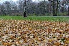 Tiergarten, Berlin Stockfotografie