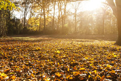 Tiergarten in Berlin in autumn Royalty Free Stock Image