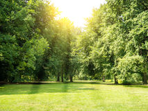 Tiergarten berlin Royalty Free Stock Photos