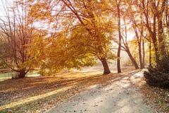 Tiergarten i Berlin i höst royaltyfri foto