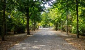 Tiergarten-Park in Berlin, Deutschland Herbst mit fallenden Blättern und grünem Baumhintergrund stockfotos