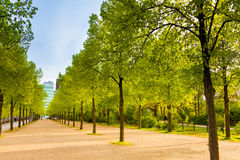 Tiergarten view with rows of trees in Berlin Royalty Free Stock Photo