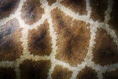 Tiergiraffenmusterhaut Stockfoto