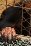 Tierhand Lizenzfreie Stockbilder