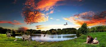 Tierharmonie Stockfoto