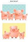 Tierhintergrund mit Schweinen Lizenzfreies Stockbild