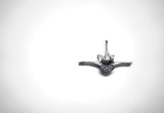 Tierischer spinaler Wirbelknochen Stockfotografie