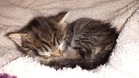 Tierisches süßes Schlafbaby Katze katt Schwedens Lizenzfreies Stockbild