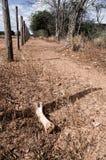 Tierknochen in einem trockenen Land Stockbild