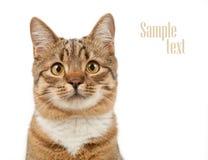 Tierkonzept Katze, die oben schaut Stockfoto