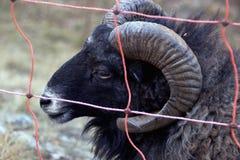 Tierkopf Lizenzfreies Stockfoto