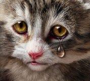 Tiermissbrauch stock abbildung