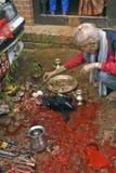 Tieropfer in Bhaktapur während Dasai stockbild