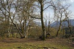 Tierpark Schloss Rosegg: Viewpoint Seat Stock Photos