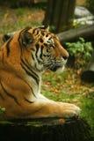 Tierporträts stockbilder