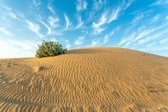 Tierra árida Imagen de archivo libre de regalías