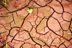 Tierra agrietada Imagenes de archivo