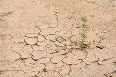 Tierra agrietada seca con la planta de la supervivencia Fotografía de archivo libre de regalías