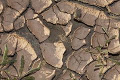 Tierra agrietada seca del concepto del cambio de clima Imágenes de archivo libres de regalías