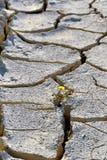 Tierra agrietada seca - sequía Imágenes de archivo libres de regalías