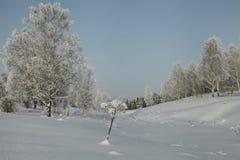 Tierra baja nevada con los abedules y otros árboles Fotografía de archivo libre de regalías
